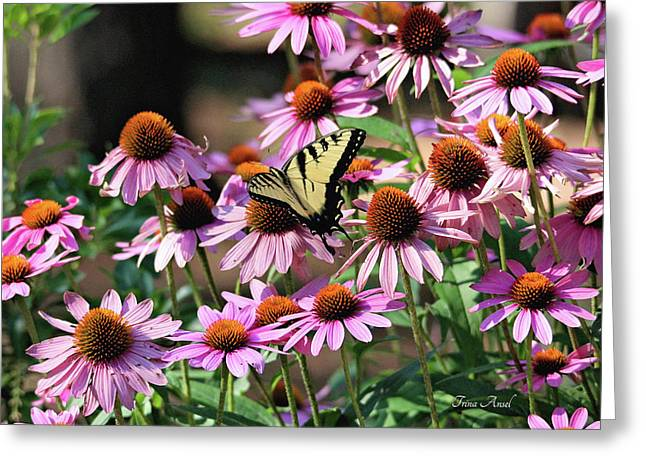 Butterfly On Coneflowers Greeting Card