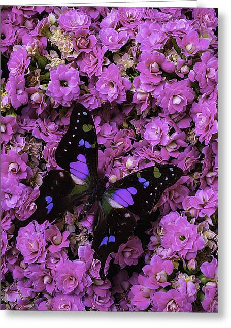 Butterfly On Kalanchoe Plant Greeting Card by Garry Gay