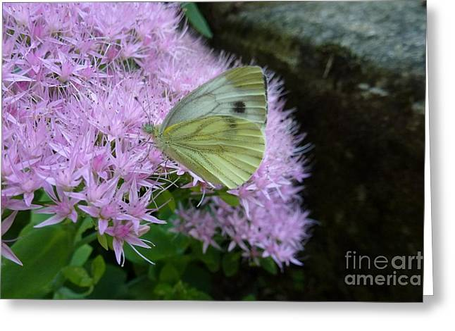 Butterfly On Mauve Flowers Greeting Card