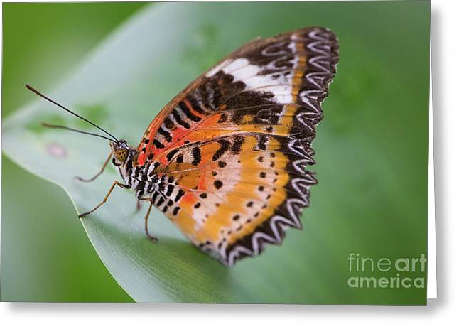 Butterfly On The Edge Of Leaf Greeting Card