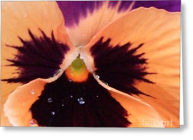 Butterfly Pansy Greeting Card by Deborah Brewer