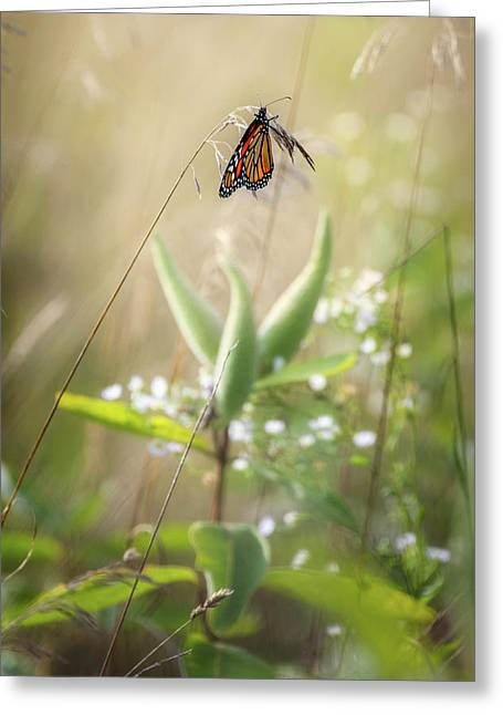 Greeting Card featuring the photograph Butterfly Paradise by Bill Wakeley