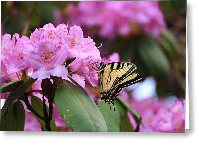 Butterfly Paradise Greeting Card
