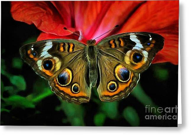 Butterfly Peacock Eye Greeting Card