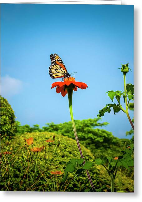 Butterfly Perch Greeting Card