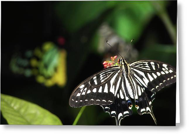 Butterfly Perfect Greeting Card by JAMART Photography