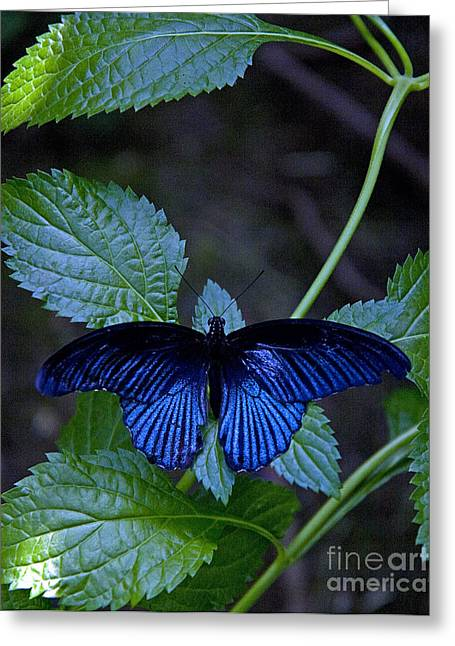 Butterfly Place Greeting Card