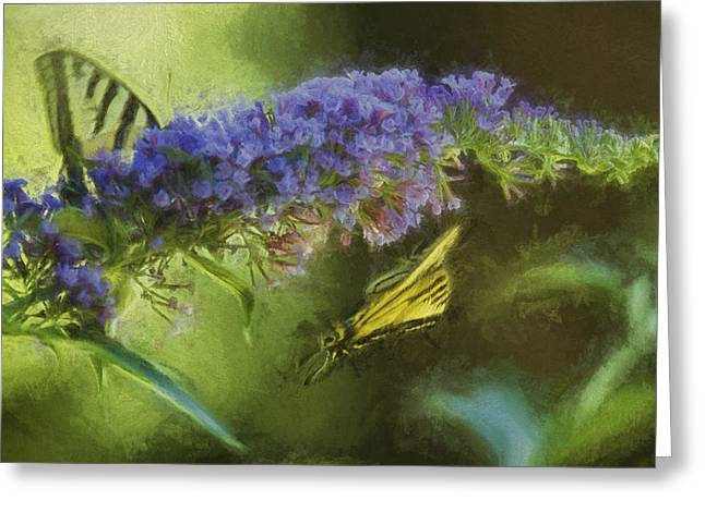Butterfly Play Greeting Card by Belinda Greb