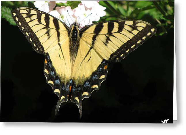 Butterfly Points Greeting Card by Debra     Vatalaro