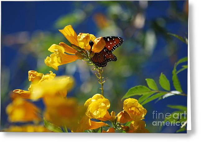 Butterfly Pollinating Flowers  Greeting Card by Donna Greene