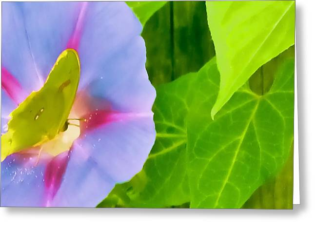 Butterfly Pollinating Morning Glory Greeting Card by Tony Grider