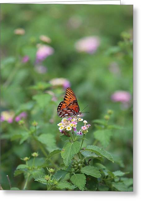 Greeting Card featuring the photograph Butterfly Posing by Ellen Barron O'Reilly