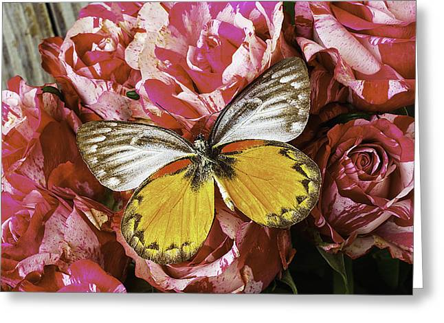 Butterfly Resting On Roses Greeting Card by Garry Gay