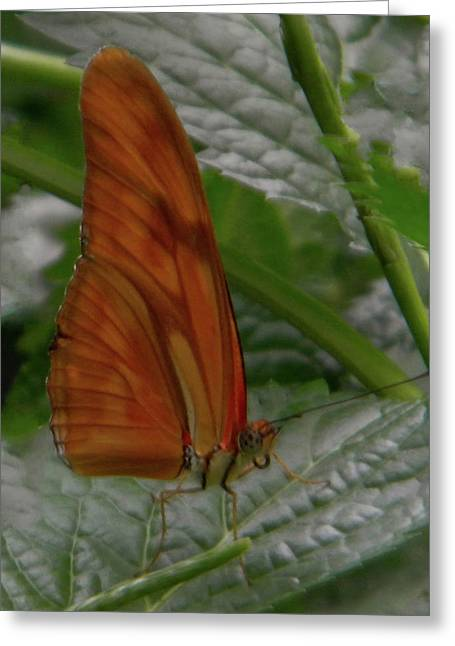 Greeting Card featuring the photograph Butterfly Smile by Manuela Constantin