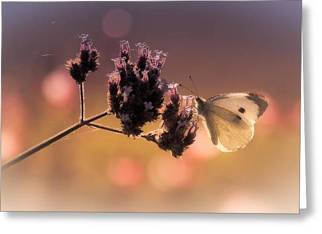 Butterfly Spirit #03 Greeting Card by Loriental Photography