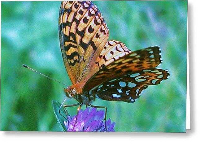 Butterfly Stare Greeting Card by Emily Michaud