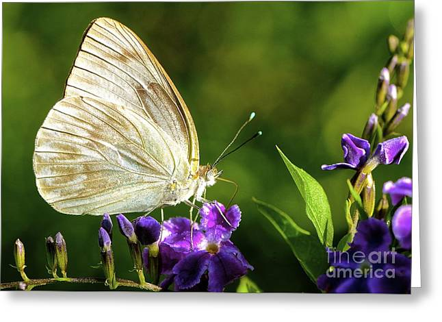 Butterfly Tea Time Greeting Card by Lisa Renee Ludlum