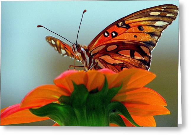 Butterfly View Greeting Card by Dottie Dees