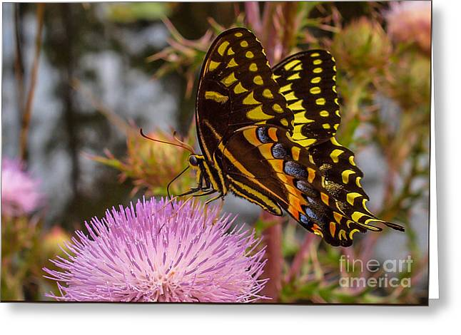 Butterfly Visit Greeting Card by Tom Claud