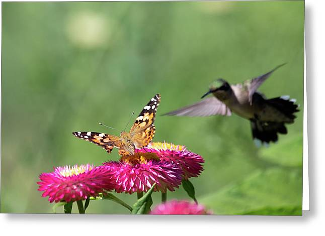 Greeting Card featuring the photograph Butterfly Vs Hummingbird 1 by Brian Hale