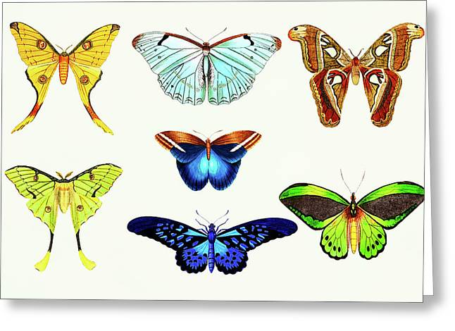 Butterfly Wall Art Greeting Card