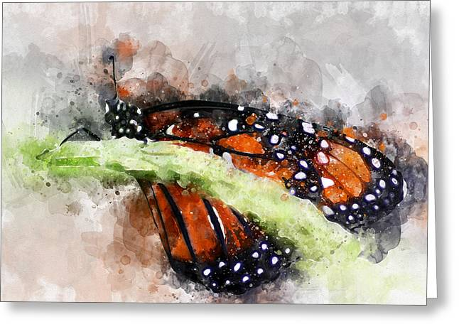 Greeting Card featuring the photograph Butterfly Watercolor by Michael Colgate