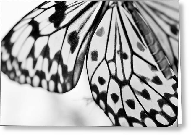 Butterfly Wings 3 - Black And White Greeting Card