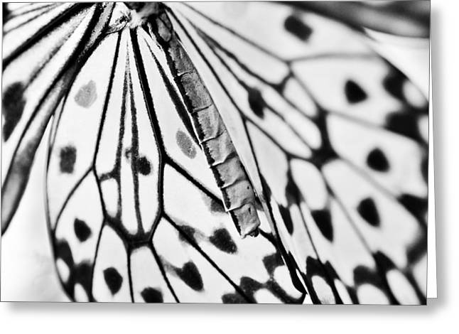 Butterfly Wings - Black And White Greeting Card