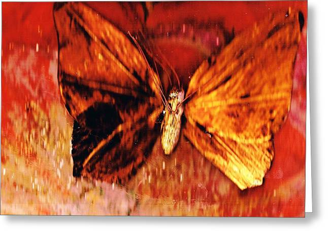 Butterfly With Dark Wing Greeting Card by Anne-Elizabeth Whiteway