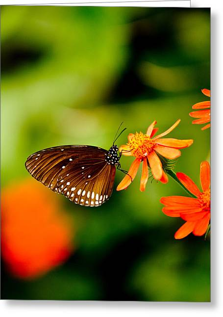 Butterfly With Orange Flowers Greeting Card