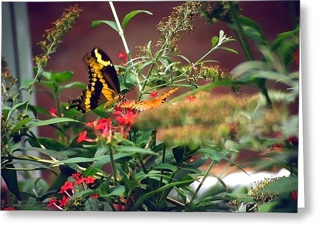 Butterfly World Watercolor 2 Greeting Card by Steve Ohlsen