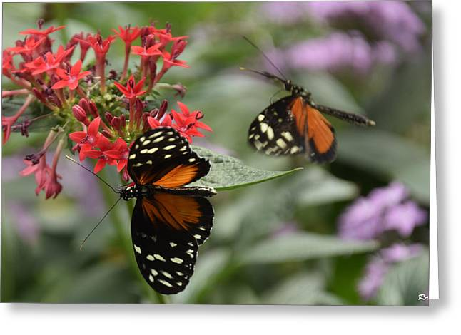 Butterfly2 Greeting Card by Ron Hebert
