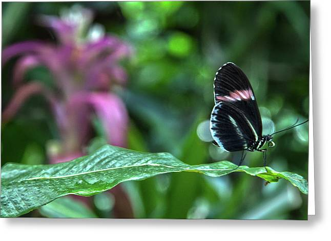 Butterfly3 Greeting Card