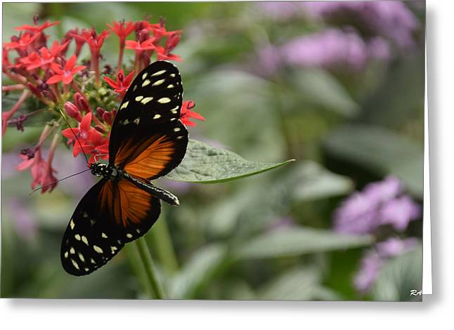 Butterfly3 Greeting Card by Ron Hebert