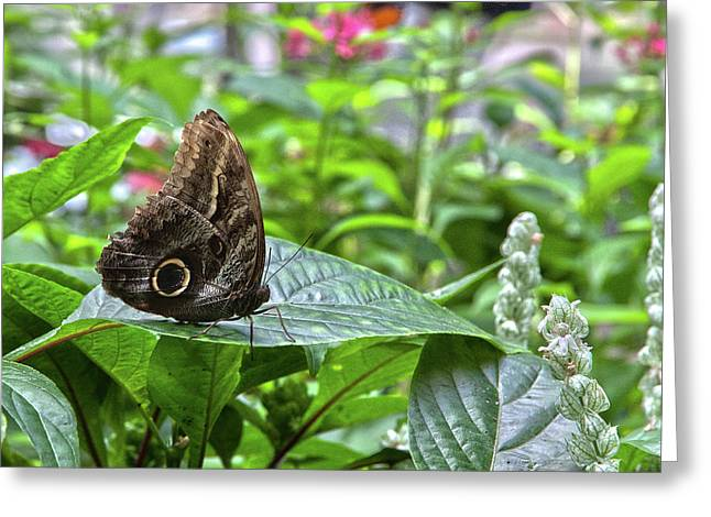 Butterfly5 Greeting Card