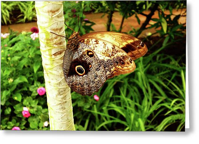 Butterfly's Eyes Greeting Card