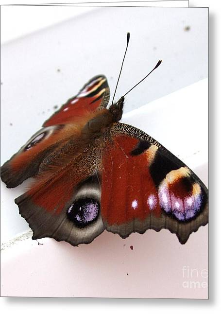 Butterfly's Wing Greeting Card by Deborah Brewer