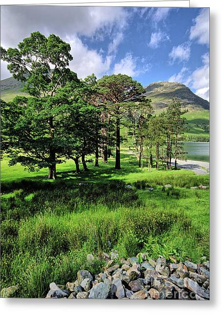 Buttermere Pines Greeting Card by Nichola Denny