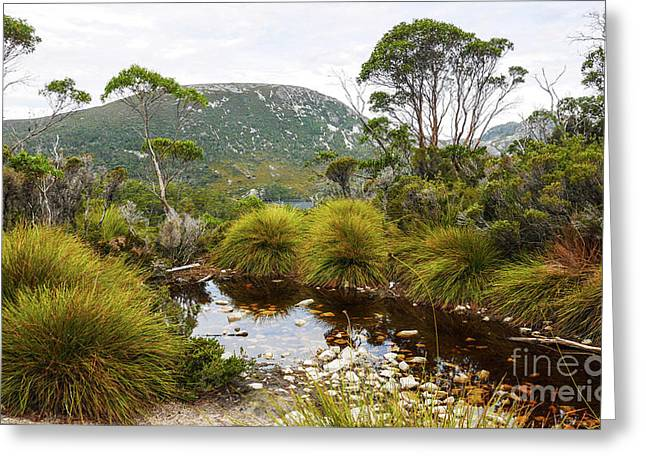 Button Grass At Dove Lake Greeting Card