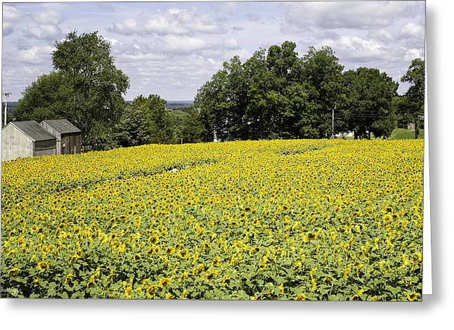 Buttonwood Farms Greeting Card by Fran Gallogly