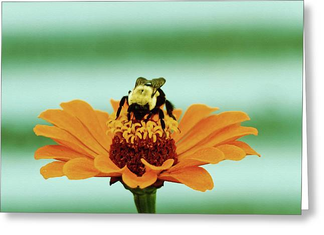 Buzz Greeting Card