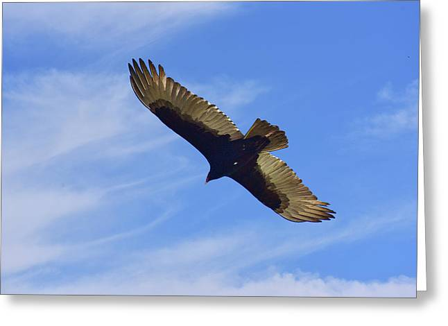 Buzzard Inflight X With Clouds Greeting Card