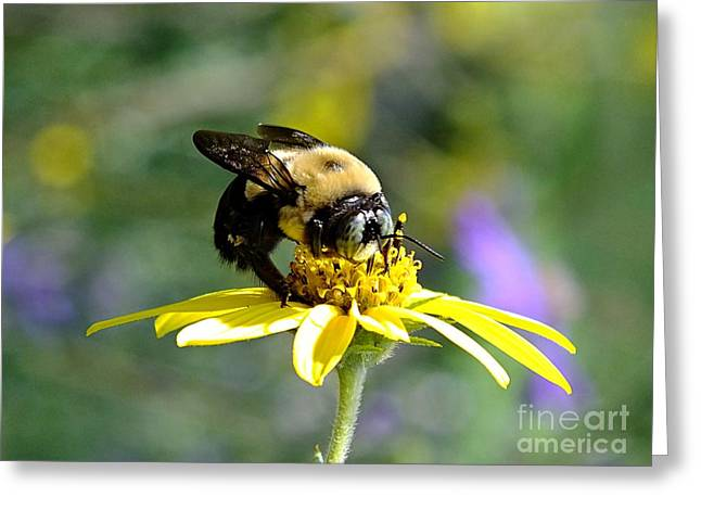 Buzzing By Greeting Card by Christy Ricafrente