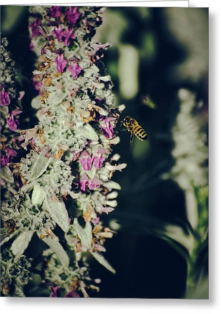 Greeting Card featuring the photograph Buzzing In My Lamb's Ear by Jason Coward