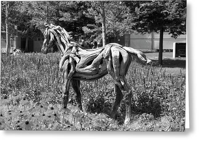 Bw Of Hope The Colt Sculpture Made Of Driftwood By Heather Jansch. Greeting Card