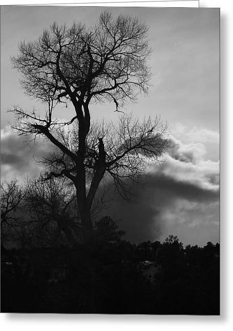 BW1 Greeting Card by Wesley Hanna