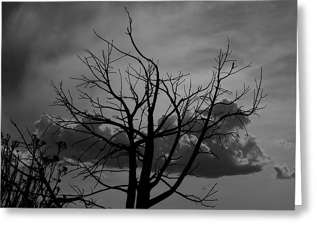 BW2 Greeting Card by Wesley Hanna
