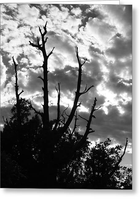 BW9 Greeting Card by Wesley Hanna