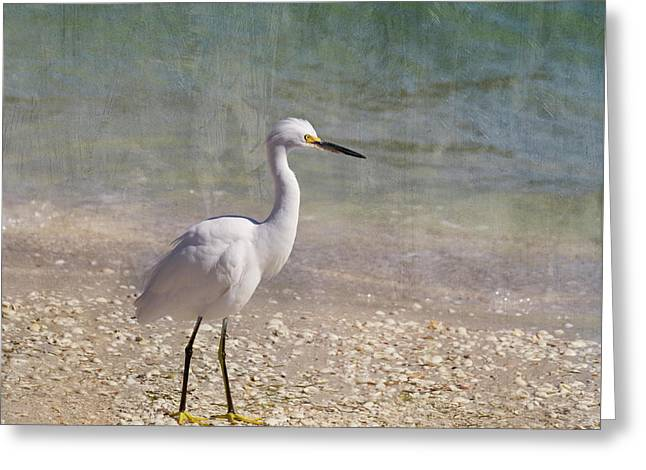 By The Sea Greeting Card by Kim Hojnacki