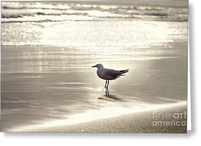 By The Sparkling Sea Greeting Card